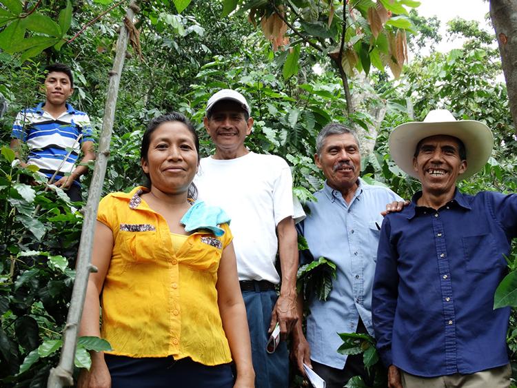 FECCEG guatemala sucre équitable bio
