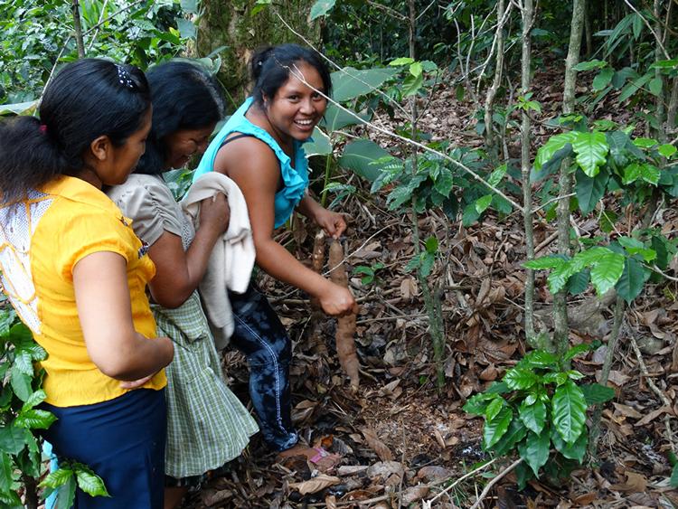 FECCEG guatemala sucre commerce équitable diversification