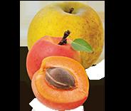 abricot pomme bio équitable paysansdici