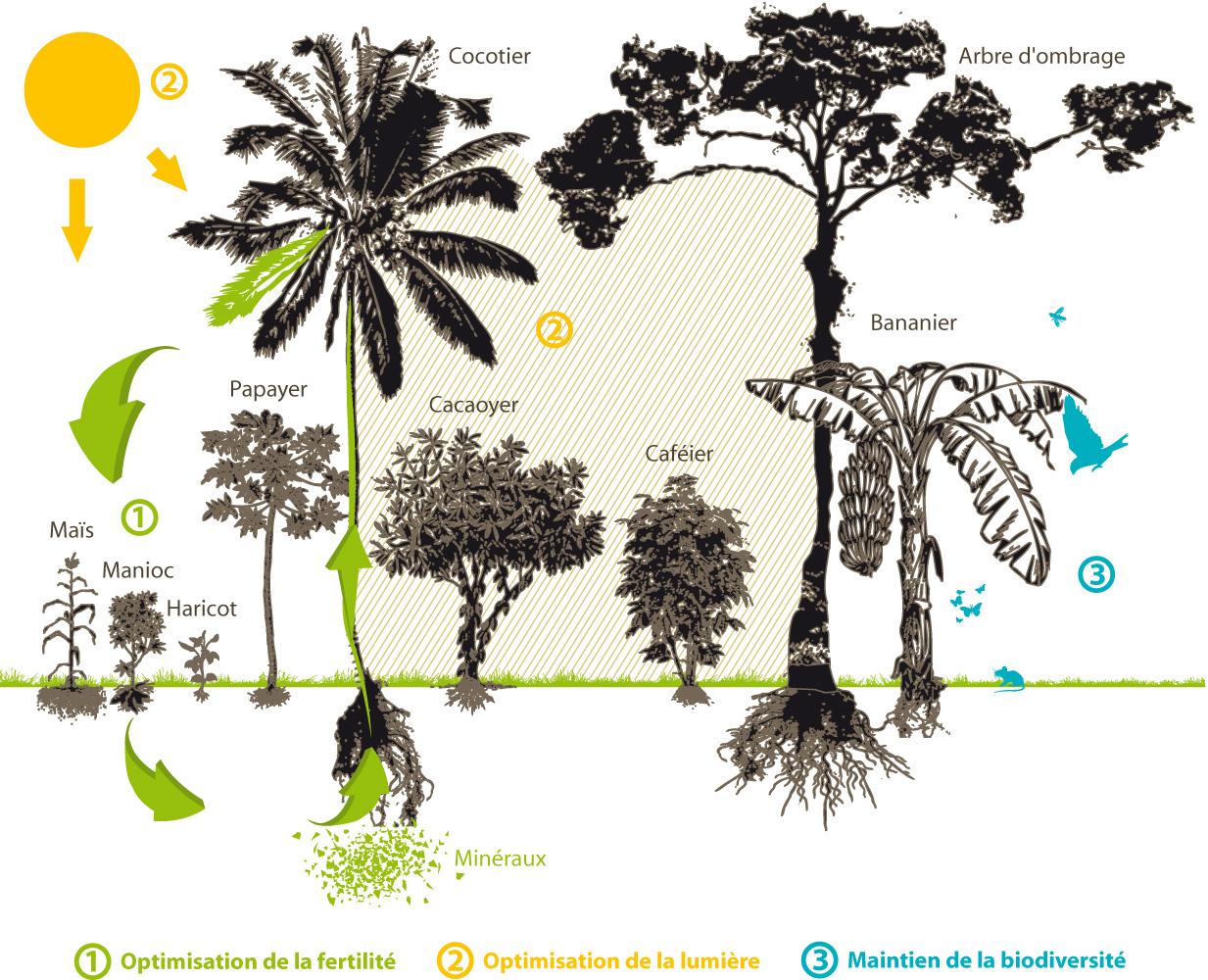 Pourquoi nous soutenons l'agroforesterie | Ethiquable