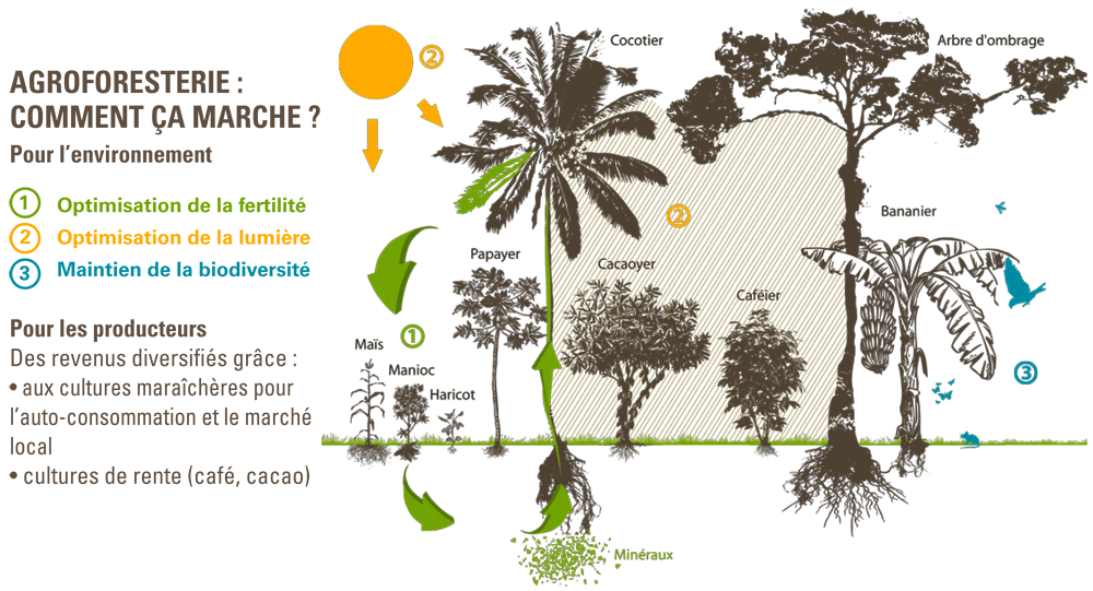 agroforesterie ethiquable