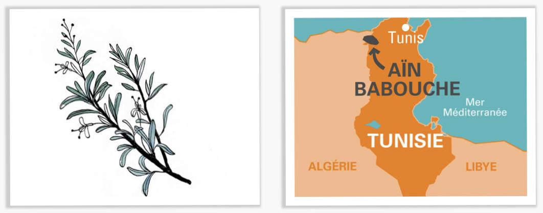 AÏN BABOUCHE  carte Tunisie