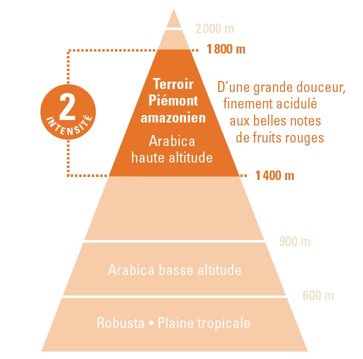 arabica Pérou altitude
