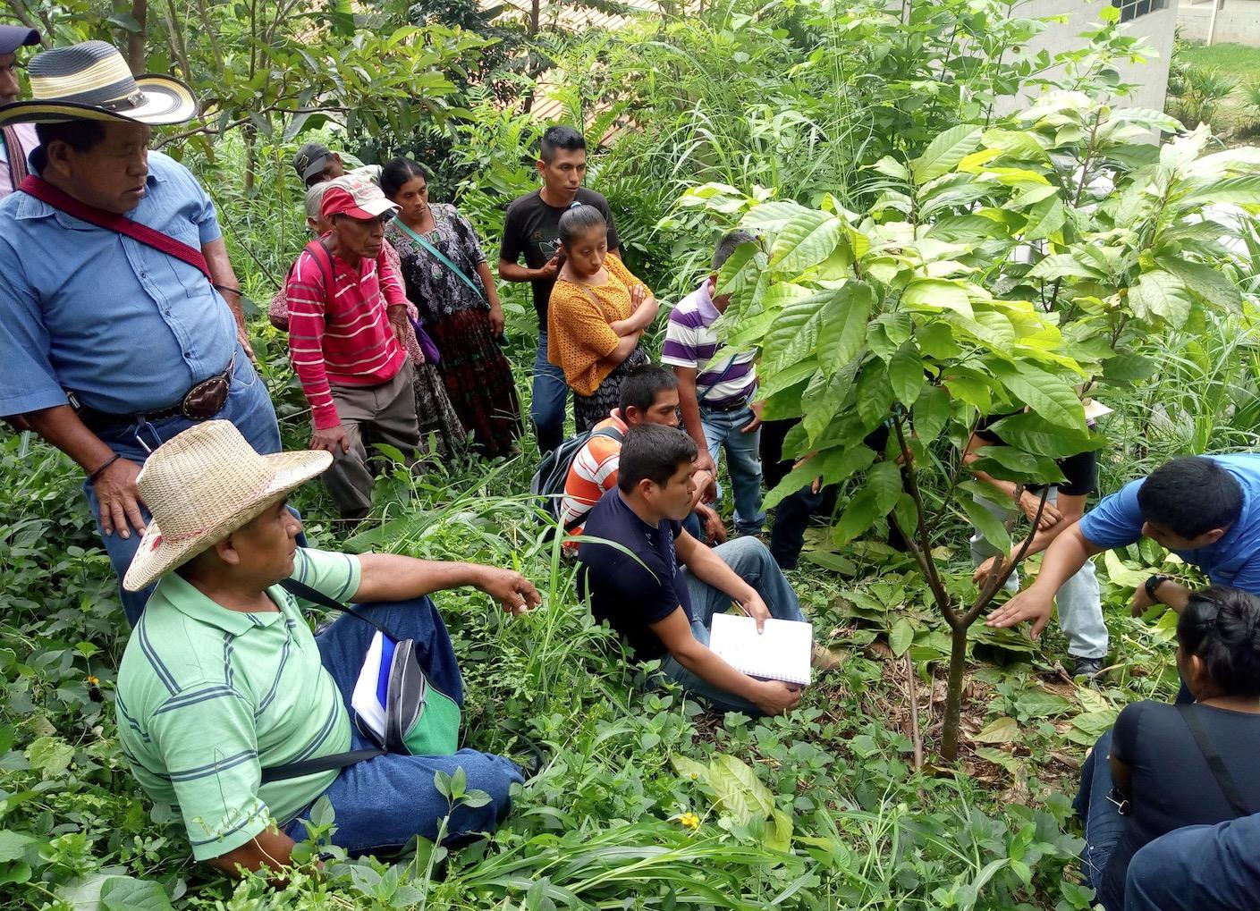 apodip-cacao-bio-equitable-78%