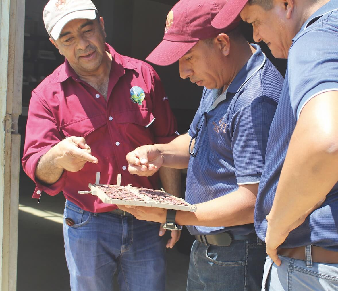 apodip cacao guatemala