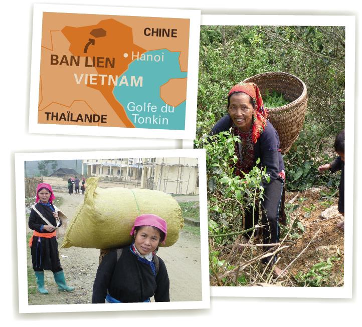 BAN LIEN vietnam ethiquable thé