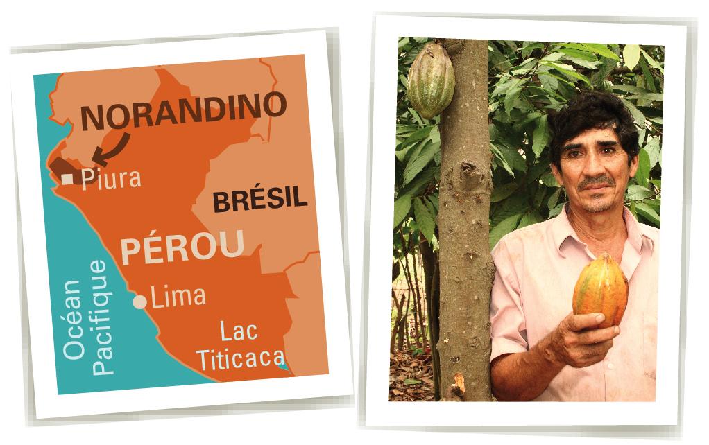 cacao bio equitable ethiquable norandino