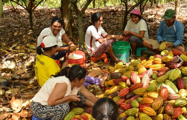 CACAO pérou cepraa ethiquable