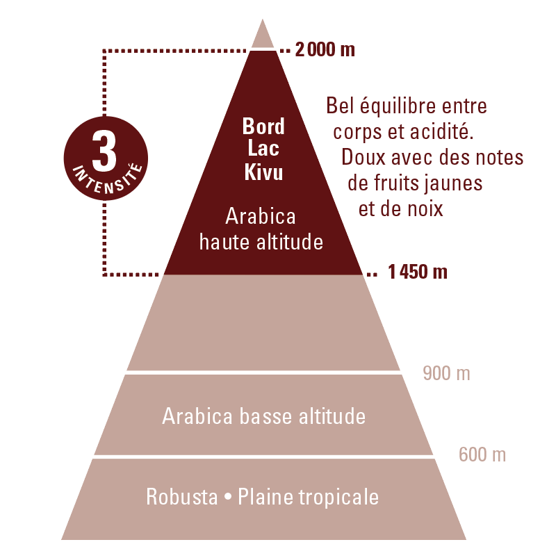 café arabica Congo equitable bio ethiquable profil