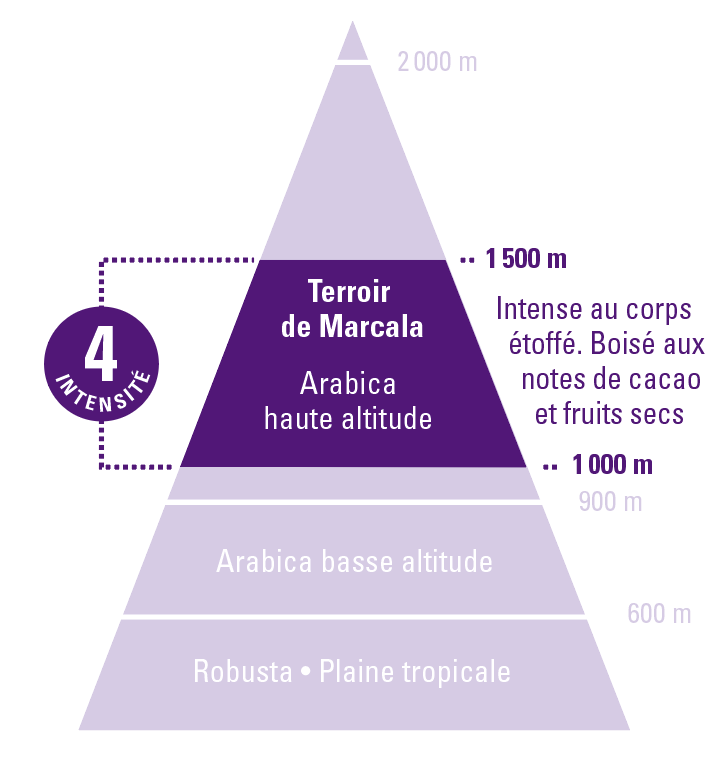 café arabica honduras equitable bio ethiquable altitude