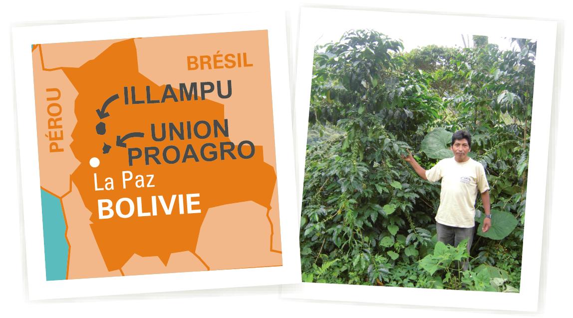 café arabica Bolivie ethiquable bio commerce équitable