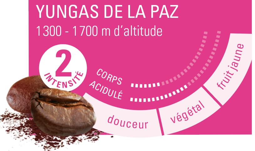 café Bolivie profil aromatique