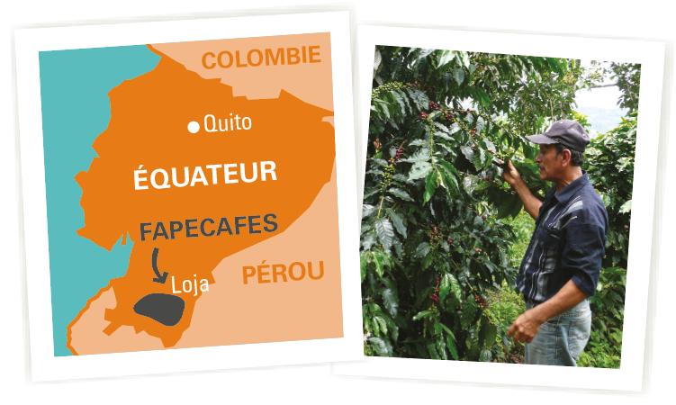 café équateur fapecafes bio équitable