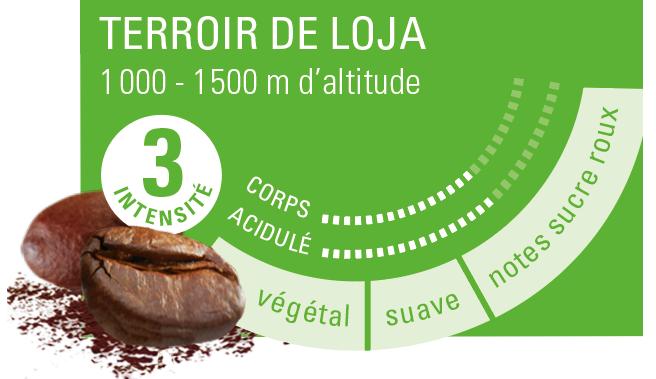 café arabica altitude Equateur ethiquable bio commerce équitablef