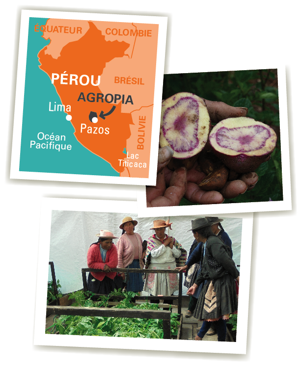 carte agropia chips