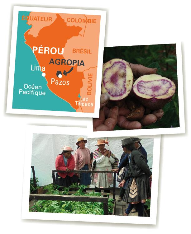carte agropia chips