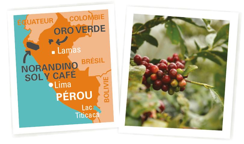 café pur origine Pérou
