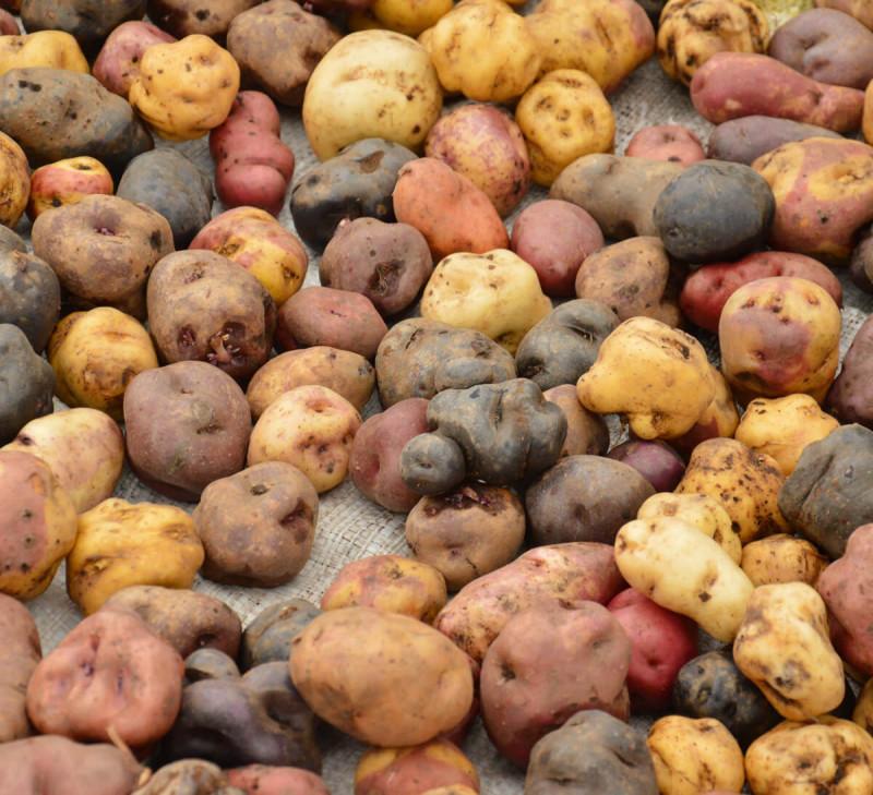 chips-pomme-de-terre-bleue-perou-equitable-bio
