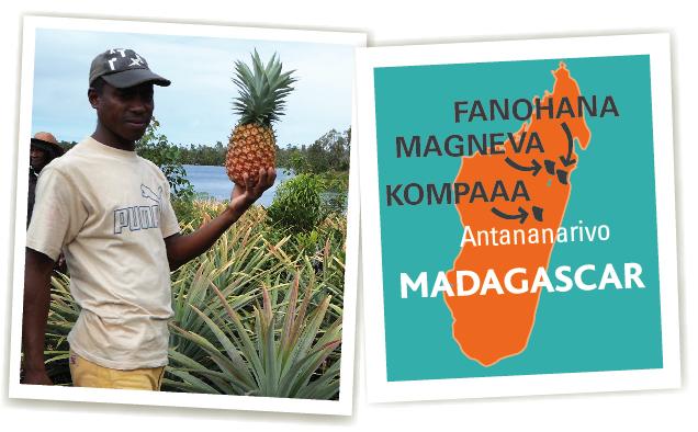 coopératives madagascar ananas ethiquable