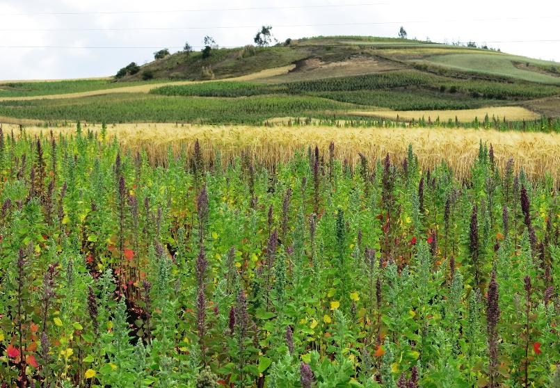 coprobich quinoa bio equitable ethiquable