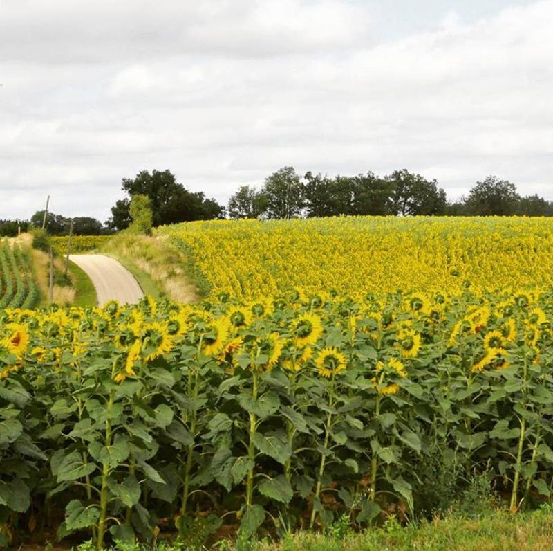 ethiquable bio de gascogne tournesol paysans d'ici