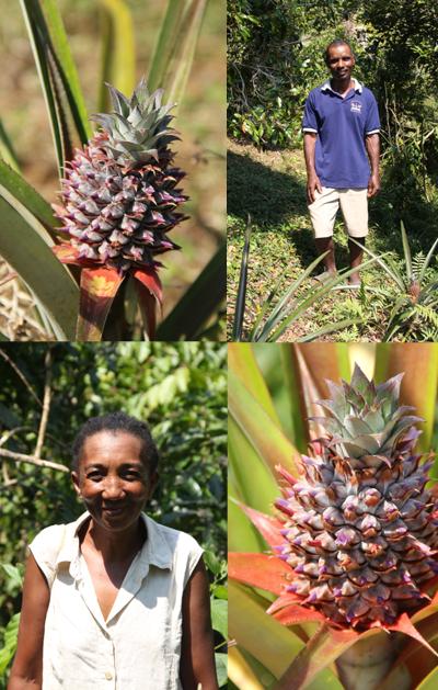fanohanna ananas equitable bio ethiquable