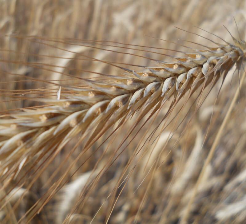 farine-complete-seigle-france-equitable-bio
