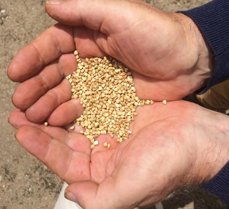farine-de-sarrasin bio équitable France paysans d'ici