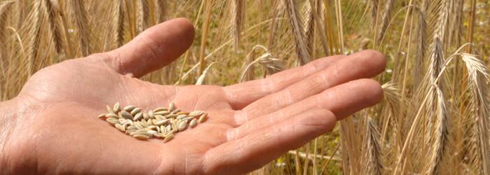 farine de seigle bio et équitable