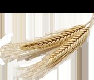 farine complète seigle bio equitable france paysansdici