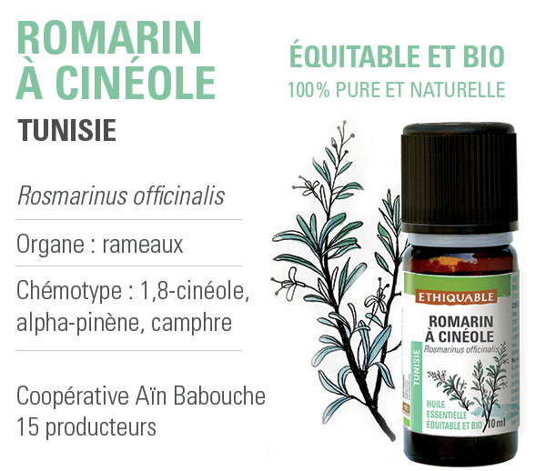 huile essentielle romarin cineole bio equitable ethiquable
