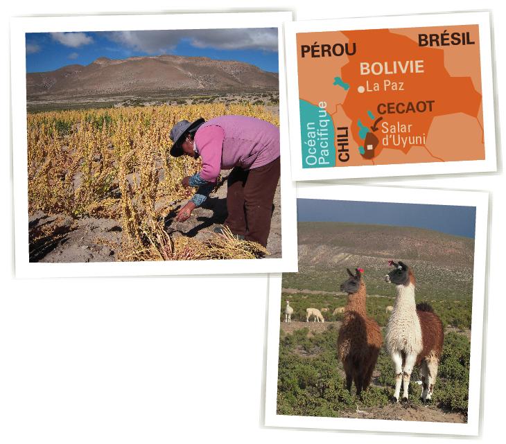 cecaot quinoa bio equitable ethiquable