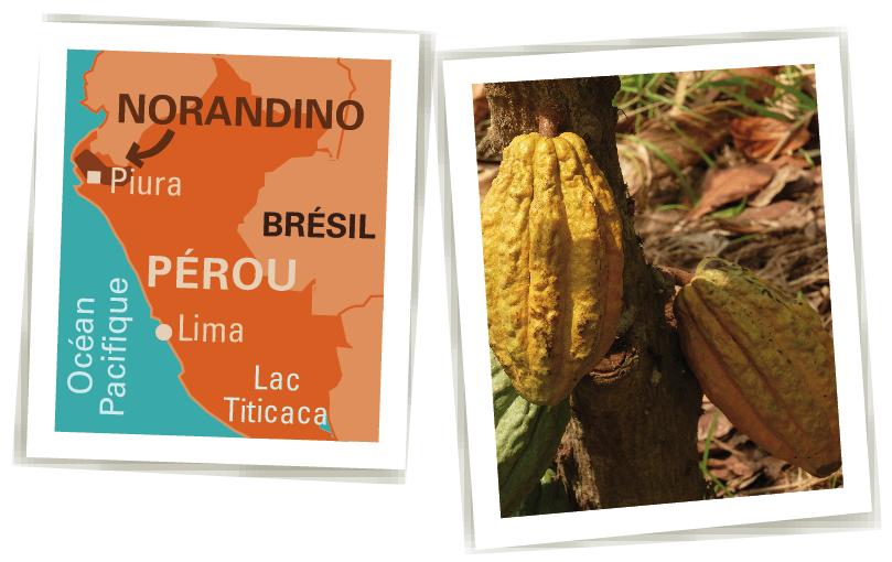 norandino cacao bio équitable pérou Ethiquable