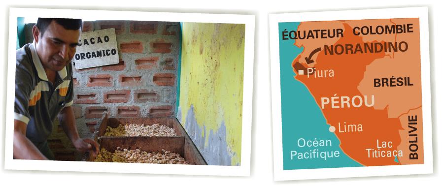 cacao pérou norandino ethiquable