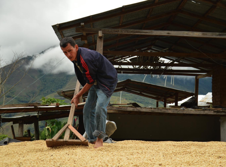 café pérou sechage ethiquable bio commerce équitable
