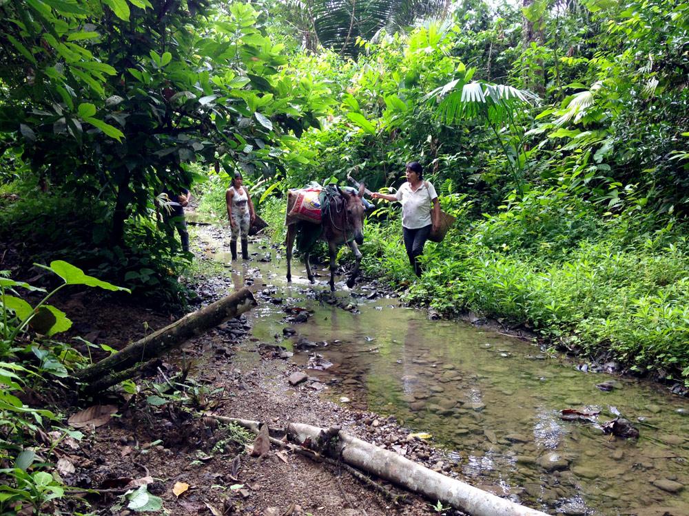 Transport du cacao par pirogue - coopérative ASOROMCHAC - Equateur