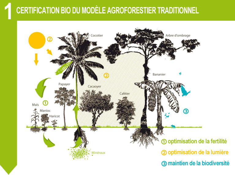 certification bio agroforestier