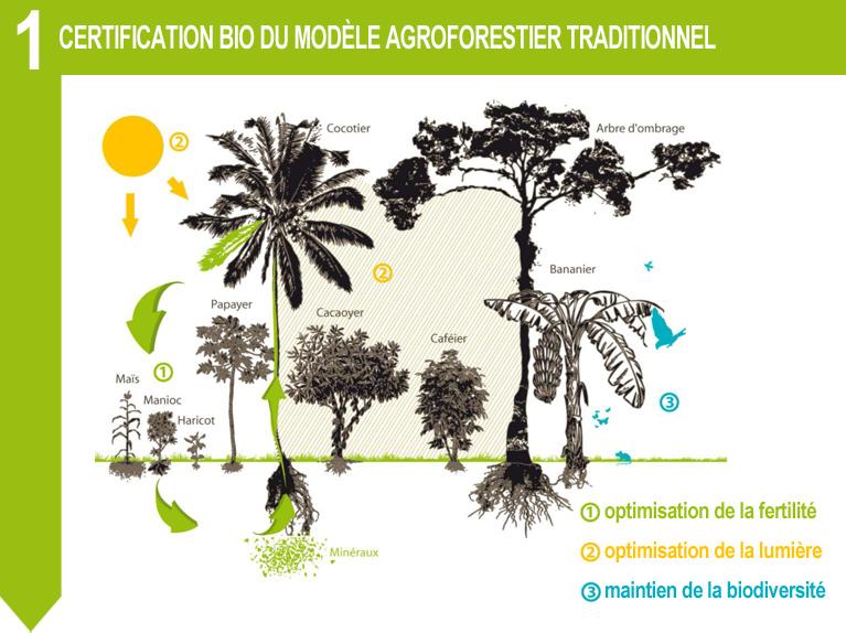 certification bio agroforestier