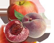 pomme-peche de vigne-bio