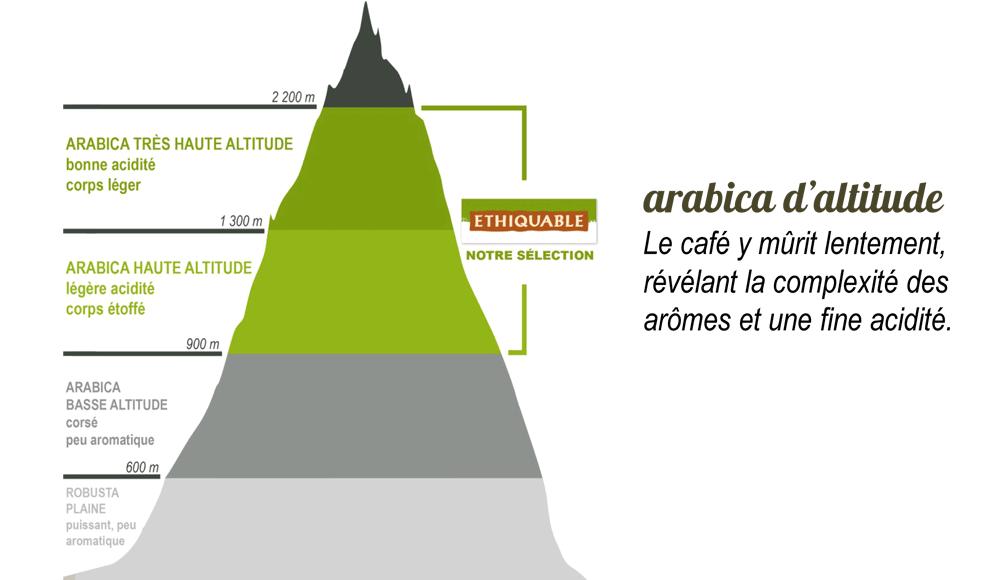 sélection d'arabica d'altitude ethiquable