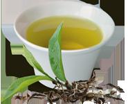 thé vert shan ethiquable équitable bio