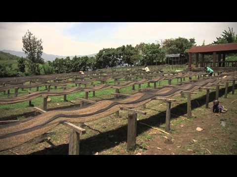 Reportage Itinéris Le café équitable du Kivu - fairtradekoffie uit Kivu