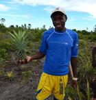 coopérative magnéva ananas