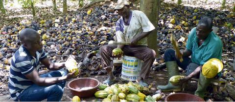 sceb cote d'ivoire caaco bio équitable