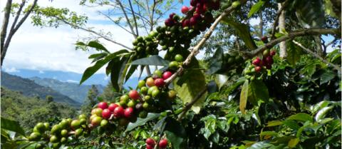 crise cours du café
