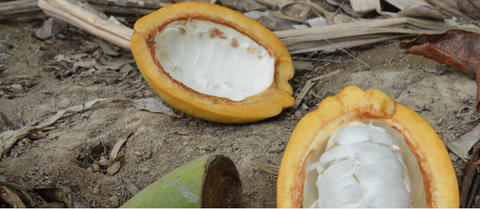 ethiquable-chocolat-lait-47%-cacao-perou-equitable-bio