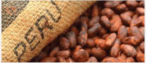 chocolaterie contsruite avec les producteurs