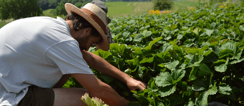 Paysans d'ici commerce équitable pour les producteurs français