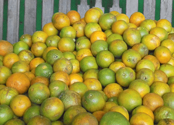 coopéalnor brésil orange Ethiquable bio équitable