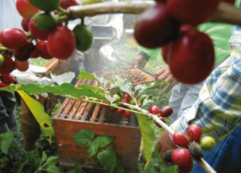 miel Mexique bio équitable ethiquable